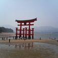厳島神社のシンボル<大鳥居>